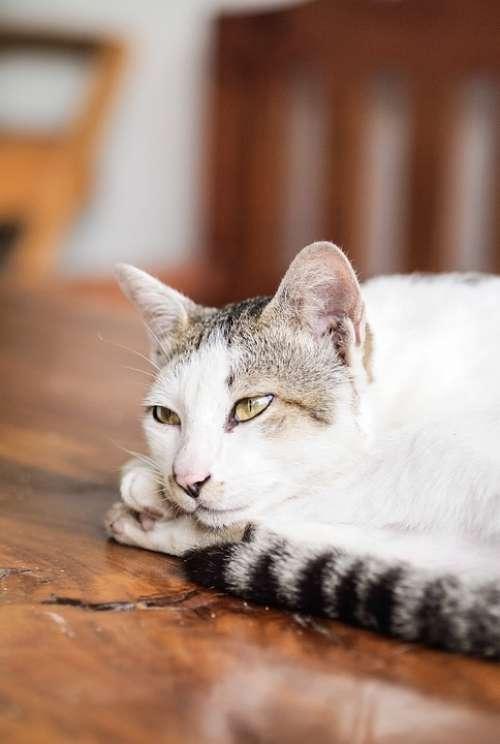Cat Animals Pet Cat'S Eyes Feline