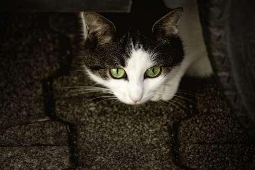 Cat Scheu Cat'S Eyes Anxious Animal