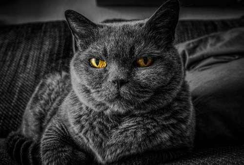 Cat Cat'S Eyes Eye Animal Pet Portrait Eyes