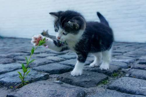 Cat Flower Kitten Stone Pet Animals Explore