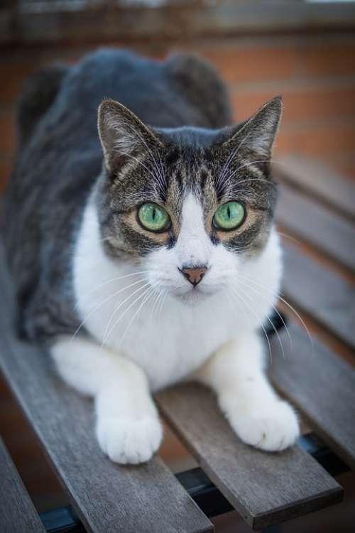 Cat Kitten Pet Feline Animal Lying