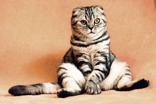 Cat Kitten Pets Animals Housecat Feline Sitting