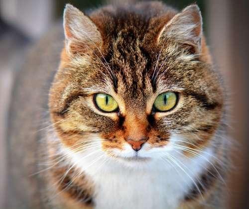 Cat Animal Pet Cats Close Up