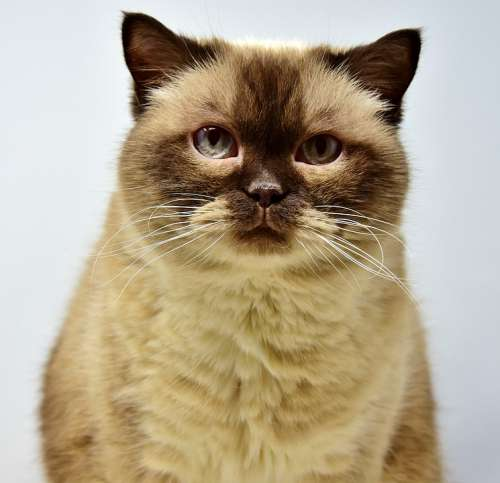 Cat Pet Mieze Short Hair Domestic Cat
