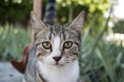 Cat Nature Predator Animals Wild Fur Cute