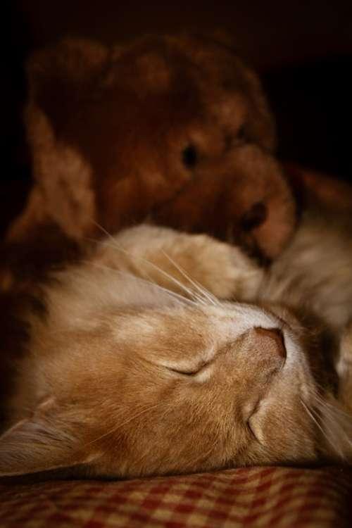 Cat Sleep Pet Animal Sleeping Cute Relax Nap