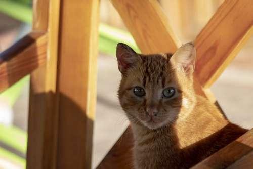 Cat Yellow Brown Wood Friend Animal Cute Eye