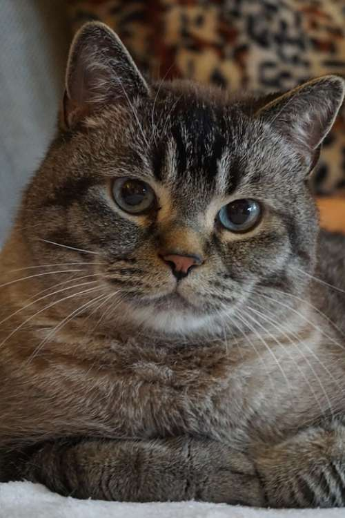 Cat Cat Love Cat Friend Love For Animals Pet