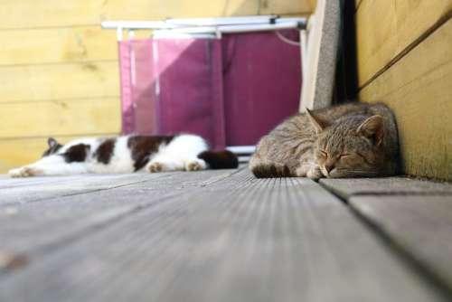 Cat Animal Pet Animal World Animals