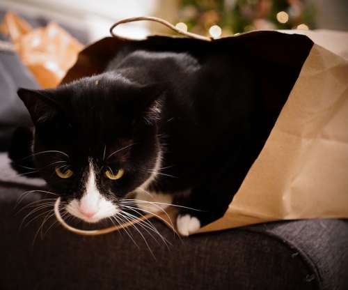 Cat Bag Christmas Tree Eyes Black