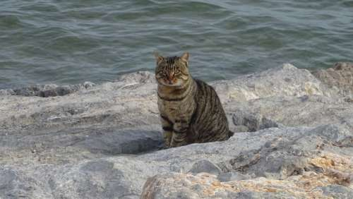Cat Rocks Sea Animals