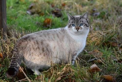 Cat Pussy Cloud Alley Cat Cat Blue Eyes Feline