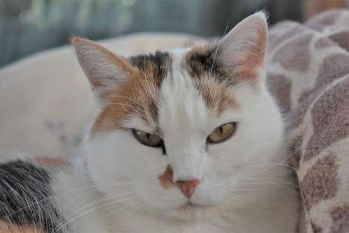 Cat Pet Animal Feline