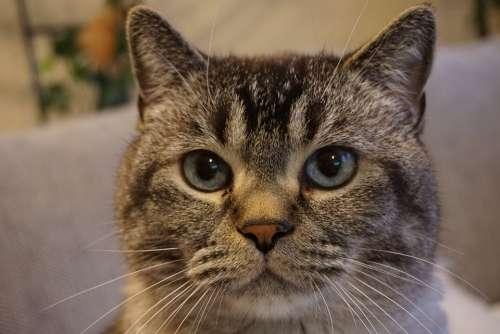 Cat Cat Face Pet Cat'S Eyes Animal Animal World