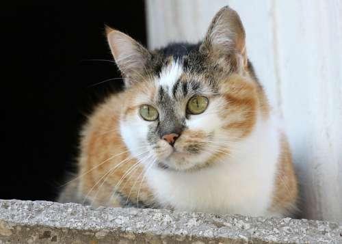 Cat Window Sill Mackerel Domestic Cat Pet Mieze