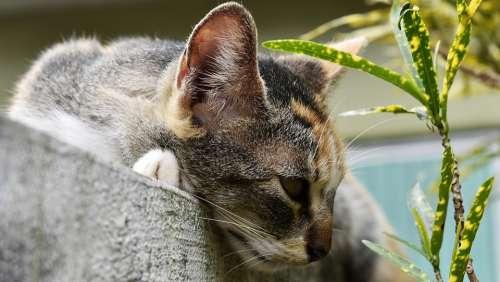 Cat Feline Pet Animals Tamed Nature
