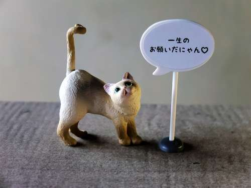 Cat Domesticated Animal Toy Figurine Message