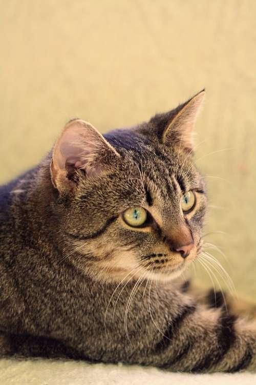 Cat Animal Pet Kitten Friendship Fluffy Tabby