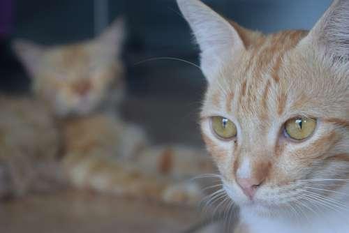 Cat Pets Animals Potrait Landscape Friendship
