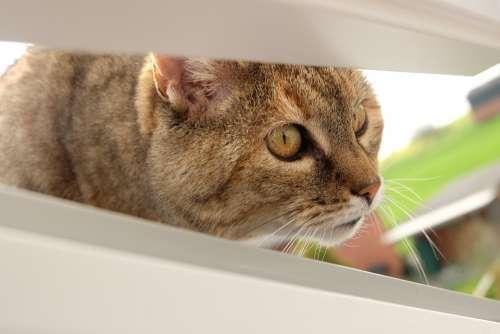 Cat Curious Pet Fluffy