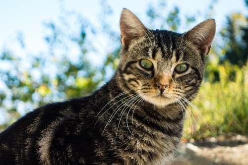 Cat Animal Feline Green Eyes Fauna Cat Face