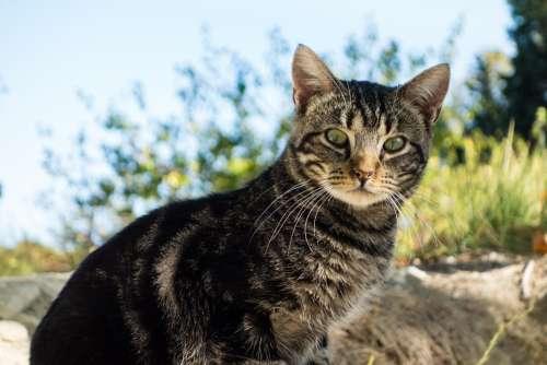 Cat Animal Green Eyes Fauna Feline Pet