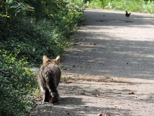 Cat Hunt Stray Nature Stalk Stalking Sneak Up On