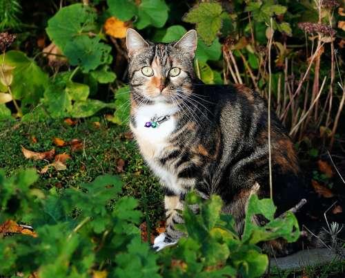 Cat Female Portrait Pet Graceful Fur Animal