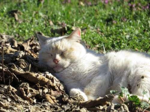 Cat Nature Animal Sleeps Feline Animals