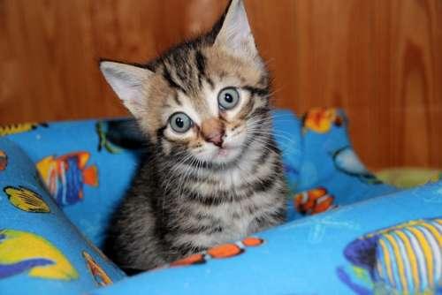 Cat Kitten Pet Animals Cute Cat'S Eye Cat Eyes