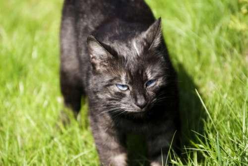 Cat Closeup Animal Kitten Look A Young Kitten Fur