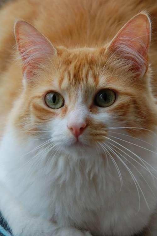 Cat Animal Pet Cute Kitten Domestic Feline Kitty