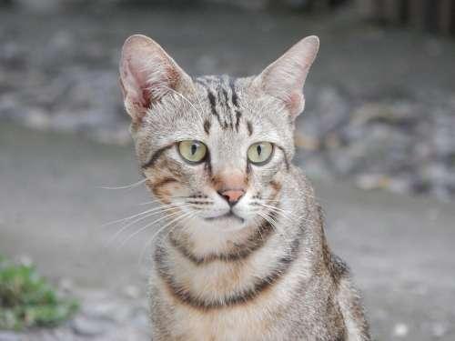 Cat Animals Wild