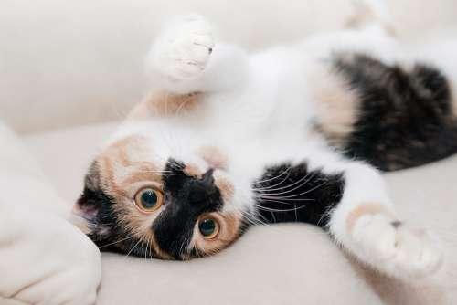 Cat Relaxation Rest Feline Animal Pet