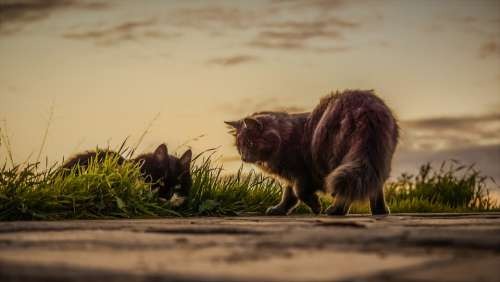 Cats Stray Sunset Nature Outdoors Mammal Grass