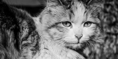 Cats Pets Animal Adorable Eyes Face Love