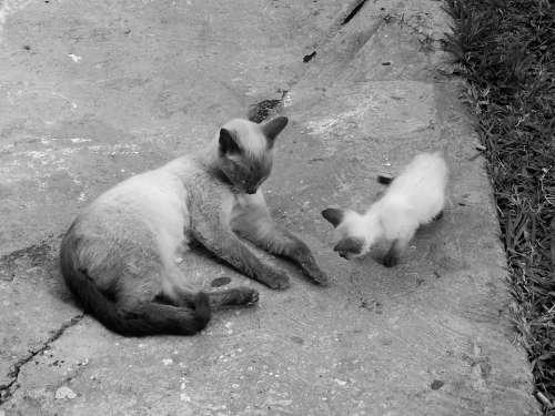 Cats Pet Animal