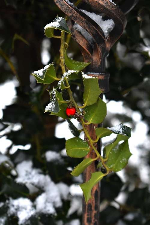Cezmína Snow Winter White Green Red