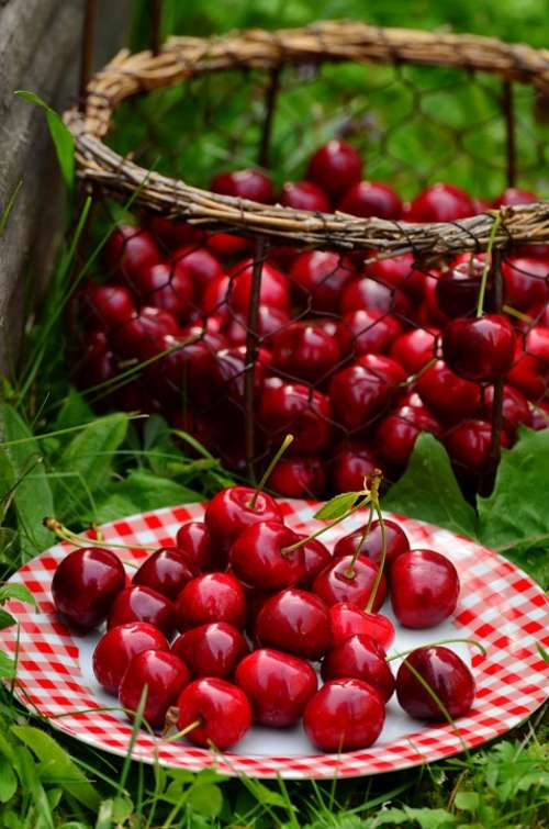 Cherries Fruits Sweet Cherry Cherry Harvest Fruit