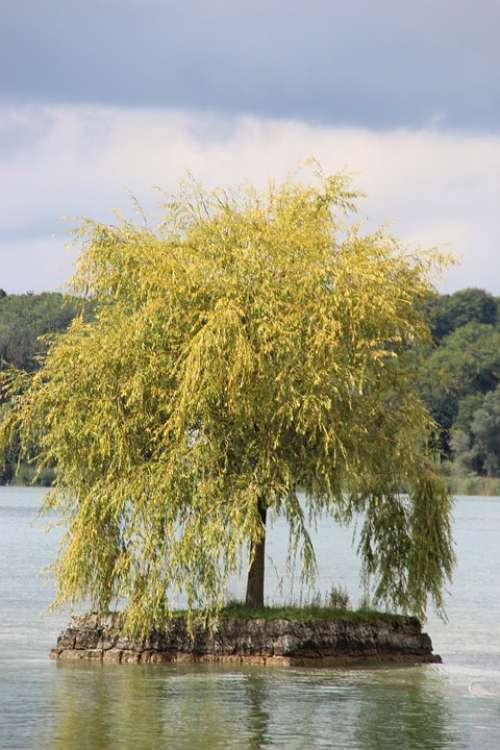 Chiemsee Ladies Island Lake Tree Bavaria Lonely