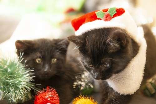Christmas Cats Kittens Santa Red Kitten Animals