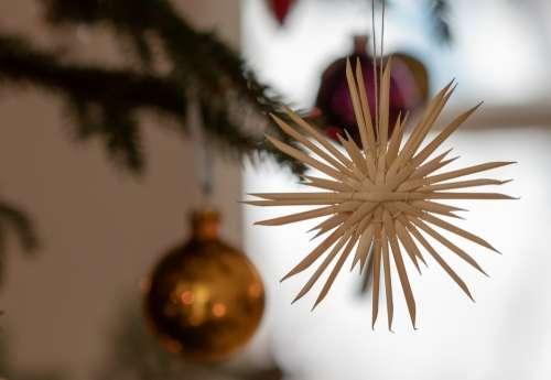Christmas Strohstern Poinsettia