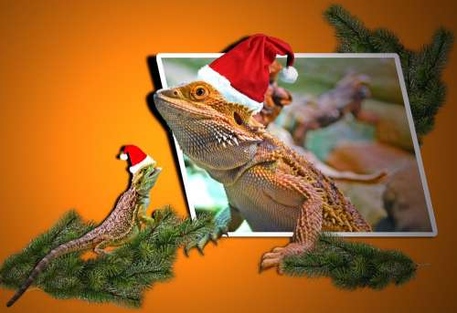 Christmas Animals Lizards Agamas