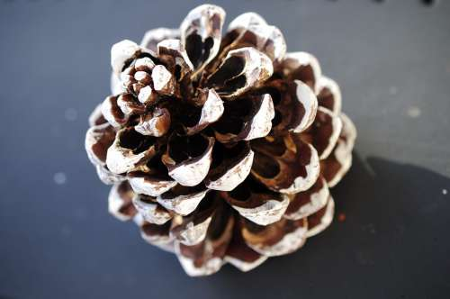 Christmas Tap Christmas Pine Cones Deco Decoration
