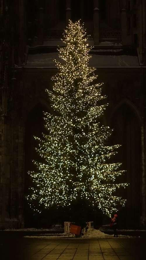 Christmas Tree Christmas Night Fir Tree