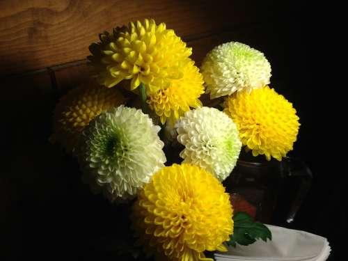 Chrysanthemum Flowers Kkotsong Blossom