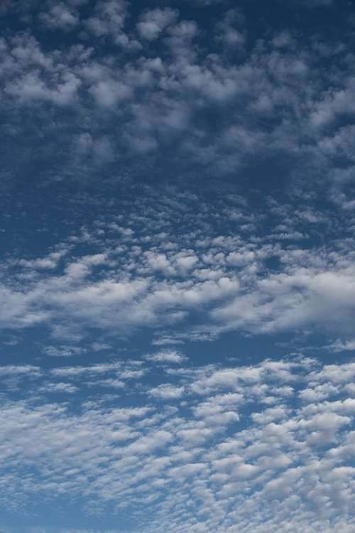 Clouds White Blue Fluffy Cirrocumulus Delicate