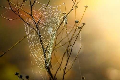 Cobweb Dew Nature Moist Autumn Web Morgentau Fog