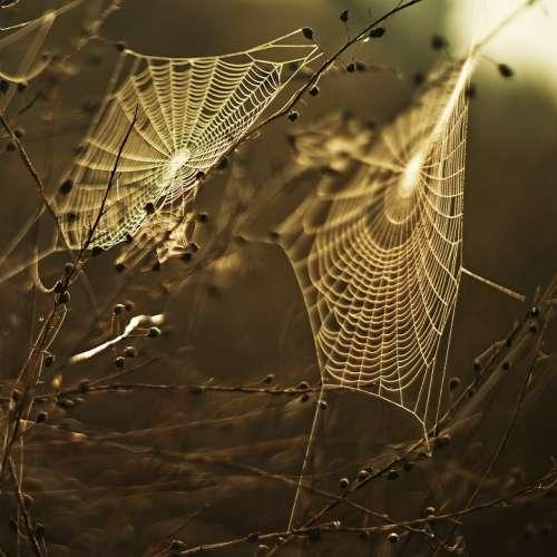 Cobweb Spiderweb Web Sunset Insect Trap