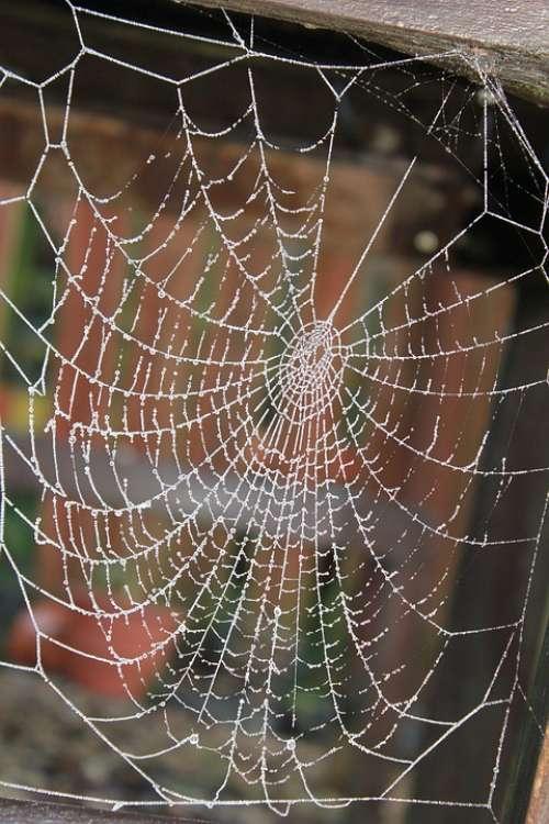 Cobweb Frost Glisten Winter Spider Silk Web